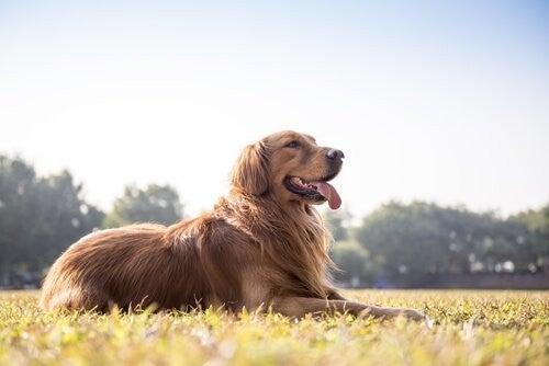 Din hunds afføring afslører dens sundhed