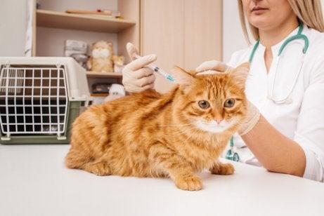 en kat hos dyrlægen