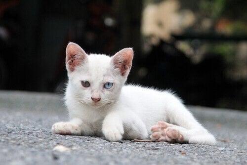 Der er et stort antal af efterladte katte i Spanien