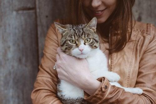 Katte med toksoplasmose