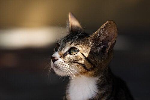 Der er store mængder af herreløse katte i mange byer