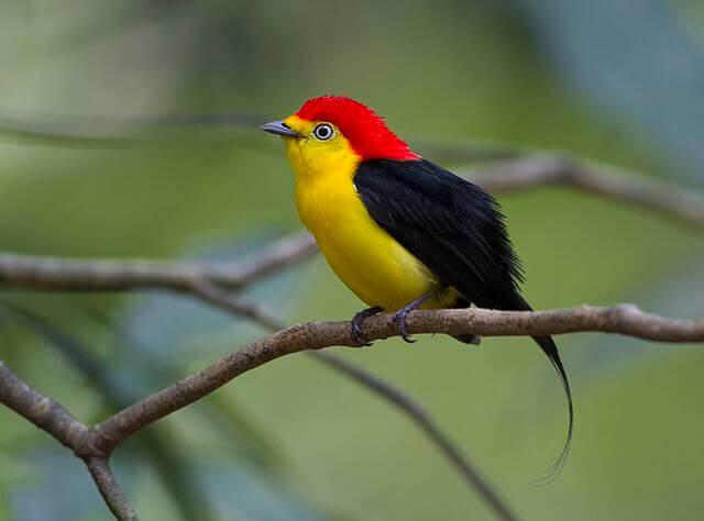 se denne fugl i amazonas