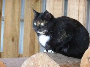 Kat på træstub