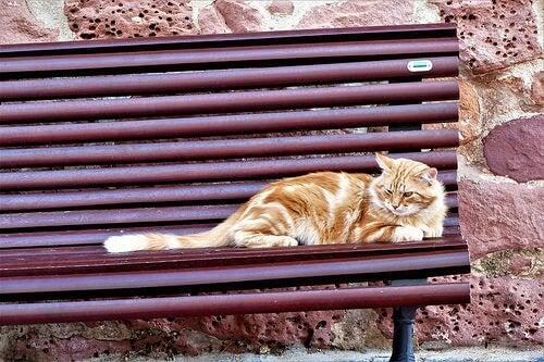 Hvordan kan jeg hjælpe hjemløse katte?