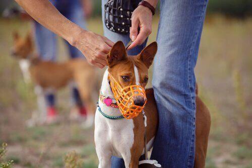 Typer af mundkurve til hunde