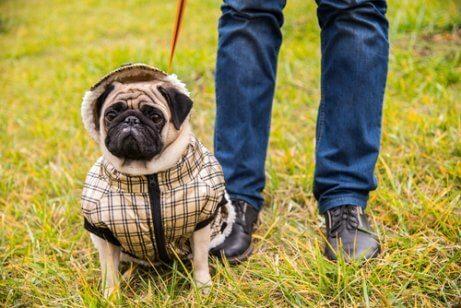 Aggressive, overbeskyttede hunde