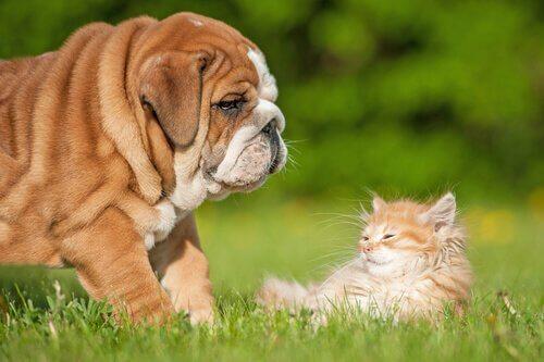 hund og kat sammen