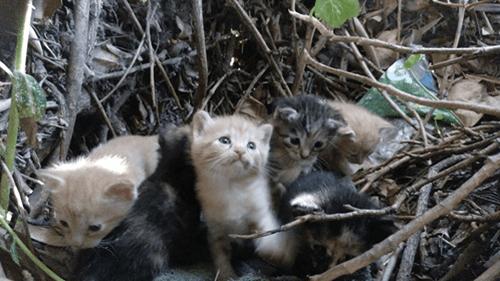 Sådan beskytter TNR-metoden herreløse katte