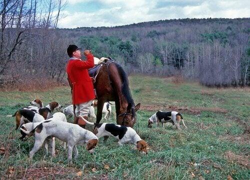 Rytter med hund. Er din hund en god jæger?