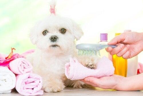Hund bliver børstet.