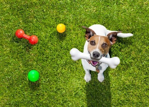 hund på græs med legetøj