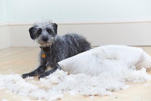 Seks adfærdsproblemer hos hunde