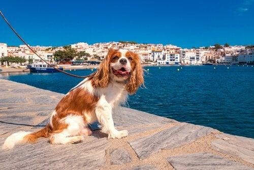 Hvad er forskellen på hunde i byen og på landet?