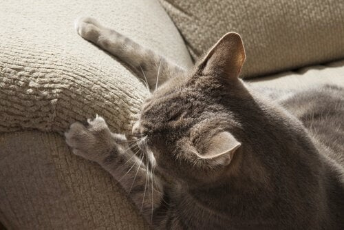kate på sofa