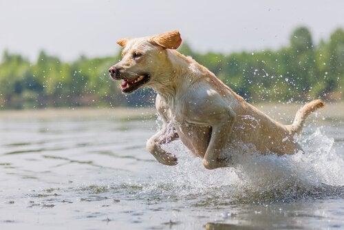 Sådan får din hund den rette mængde motion