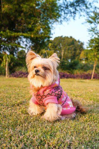 klædt på til en tur på landet