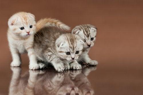 Tre små killinger