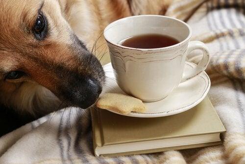 Undgå at din hund stjæler mad