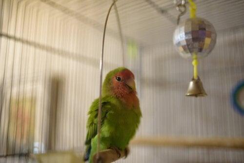Giv fuglene legetøj, så de ikke keder sig
