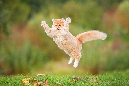Hvad kan gøre din kat glad?