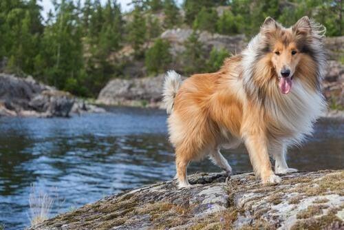 Gode navne til langhårede hunde