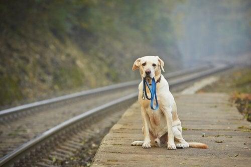 Hvad skal man gøre, hvis man finder et herreløst kæledyr?
