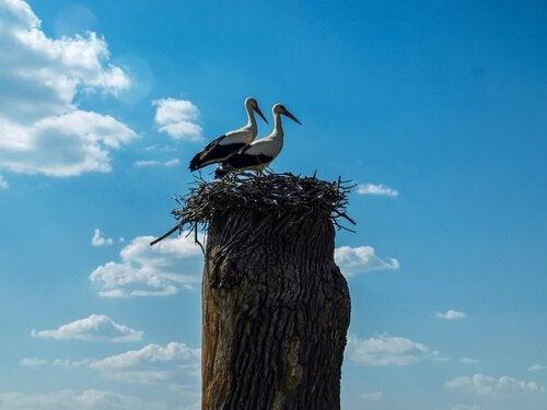 To storke, Klepetan og Malena, der er forelsket i hinanden