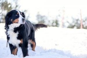 Hund leger i sneen