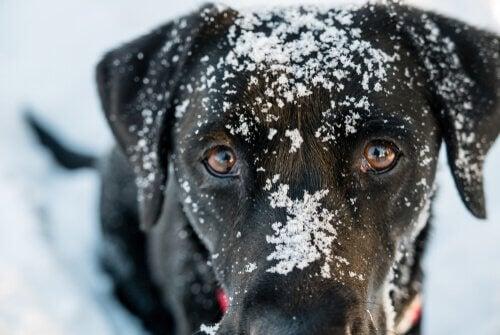 Underafkøling hos hunde: Symptomer og behandling
