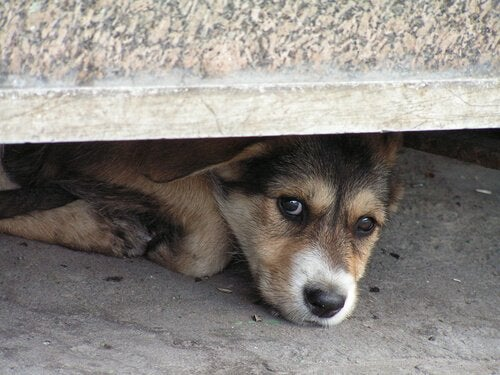 Sådan hjælper du en hund, der er bange for stormvejr