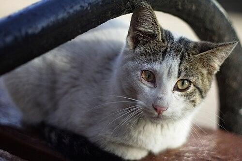 Syg kat symboliserer kræft hos katte