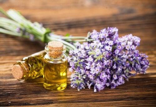 Brug lavendel i dine hjemmelavede insektsprays