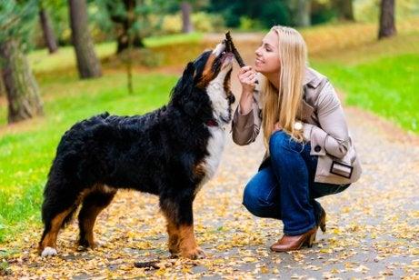 kvinde leger med hund