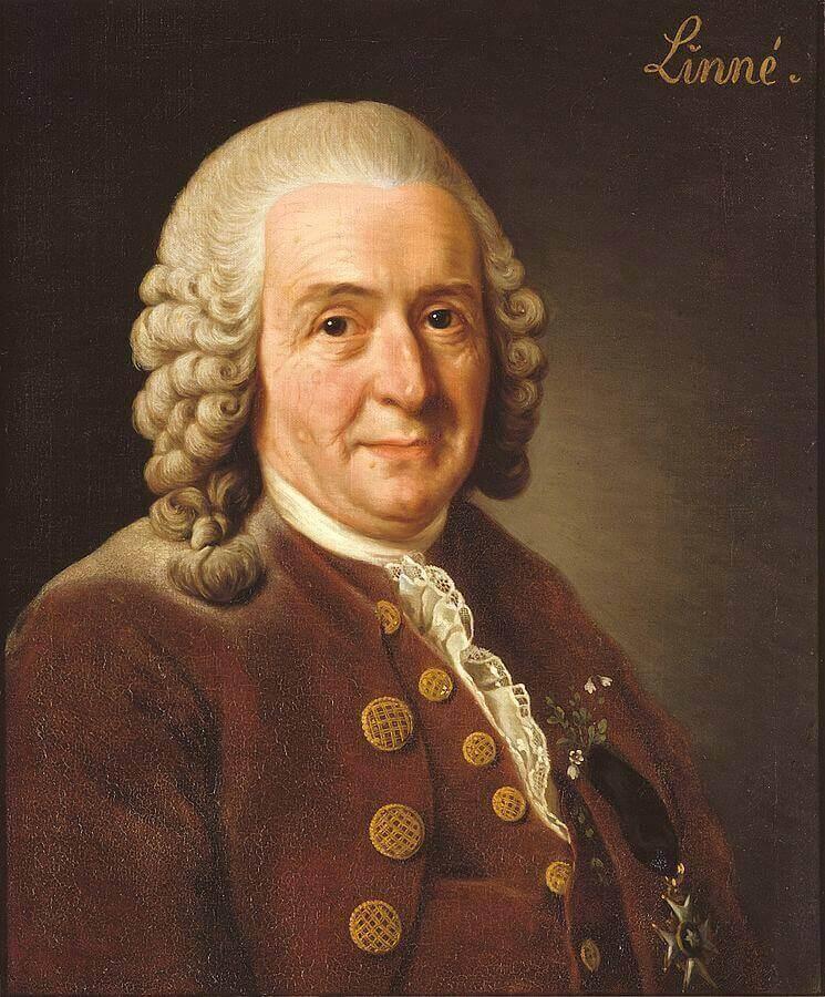 Carl von Linne.