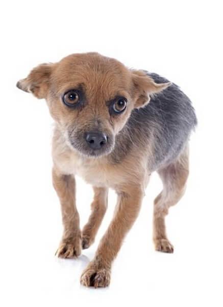 Gode råd til hunde, der er bange for uvejr