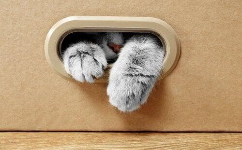 Katte elsker papkasser, men hvad er grunden til det?