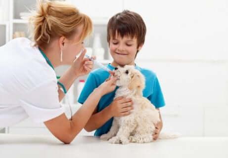 En dreng tager sit kæledyr til dyrlægen