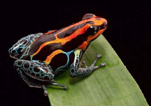 Aposematisme hos dyr: Hvad er det?