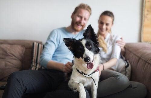 """En hund sammen med dens """"forældre"""""""