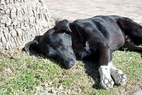 En hund slapper af i solen