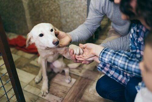 Frivillige leger med en hund
