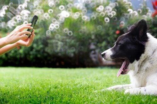 En hund får taget et billede på græsplæne