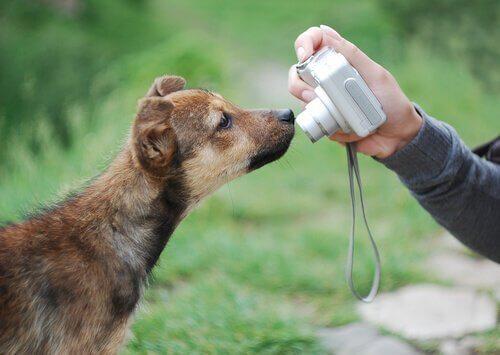 At tage gode billeder af hunde: 7 gode tips