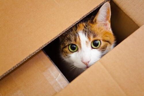 En kat gemmer sig i en papkasse