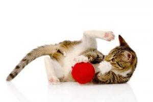 Kat leger med en rulle garn