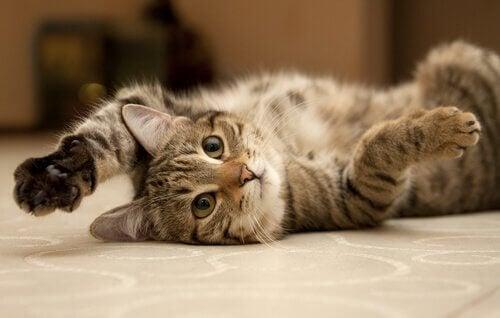 En kat ligger og leger