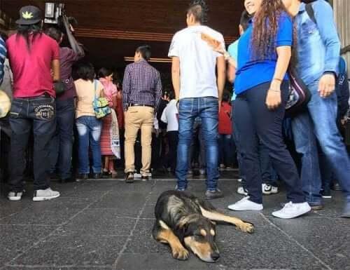 Efterladte herreløse hunde ved Guadalupe basilika