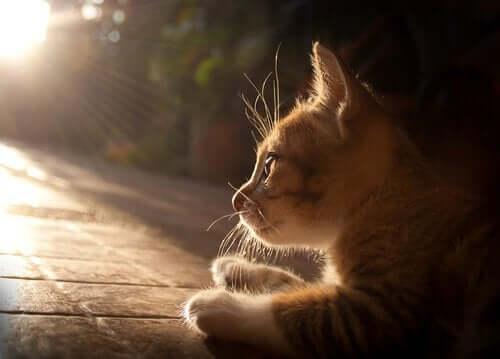 En kat ligger og hviler sig