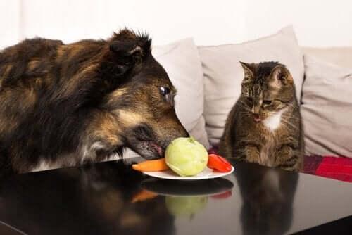 Vidunderlige frugter og grøntsager til hunde