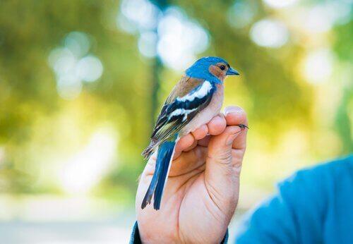 Fugl sidder på persons hånd